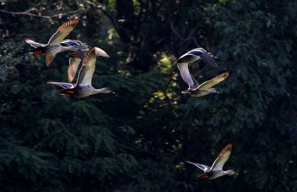 Flight Of Togetherness - My Click My Pick