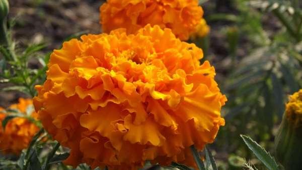 Always Be Saffron - My Click My Pick