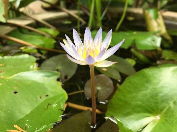 No Mud, No Lotus. No Pain, No Gain.     - My Click My Pick