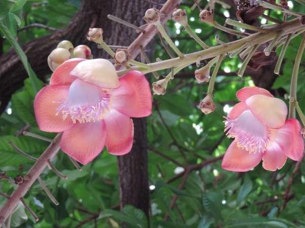 Beautiful Flowers - My Click My Pick