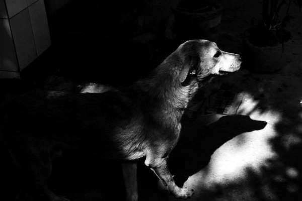 Dogs Are Better Humans. - My Click My Pick