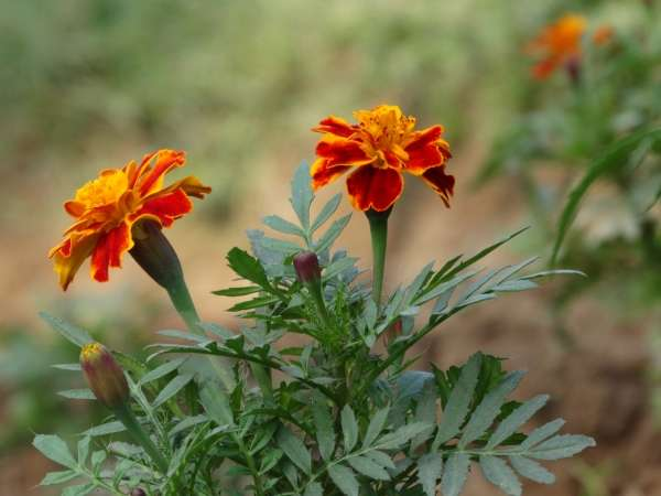 Flower - My Click My Pick