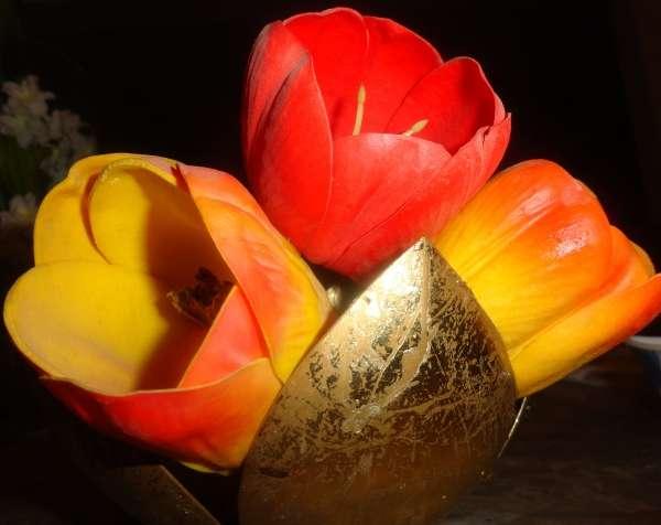 Vibrant Tulip's - My Click My Pick