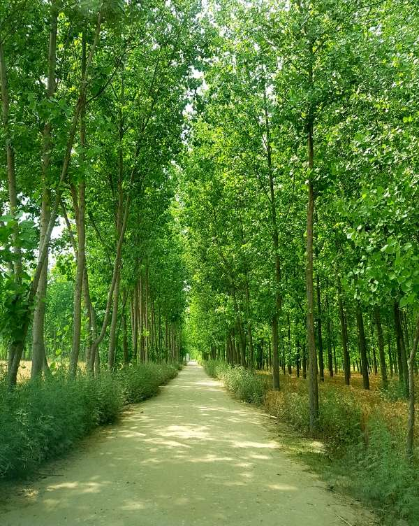 Road To Green Revolution - My Click My Pick