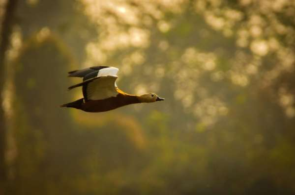 Returning Home! - My Click My Pick
