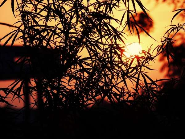 You Won't See Same Sunset Again - My Click My Pick