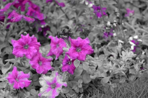 The World Ain't Grayscale Its Painted With Beautiful Colours - My Click My Pick