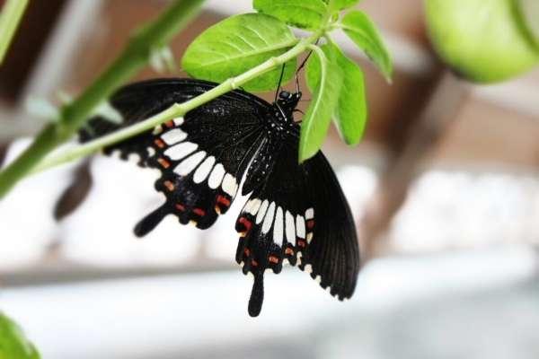 Beauty Of Black - My Click My Pick