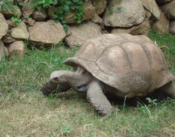 We Need To Be Consistent Rather Fast As Tortoise  - My Click My Pick