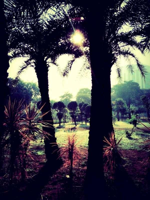 Nature's Abode - My Click My Pick