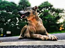 The Better I Get To Know Men The More I See Self Loving Dogs - My Click My Pick