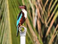 The Glaring Bird - My Click My Pick